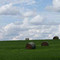 Bales and Sky Wide